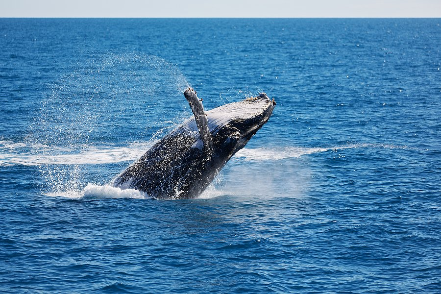 Humpback Whale of Fraser Island, best place for families to go