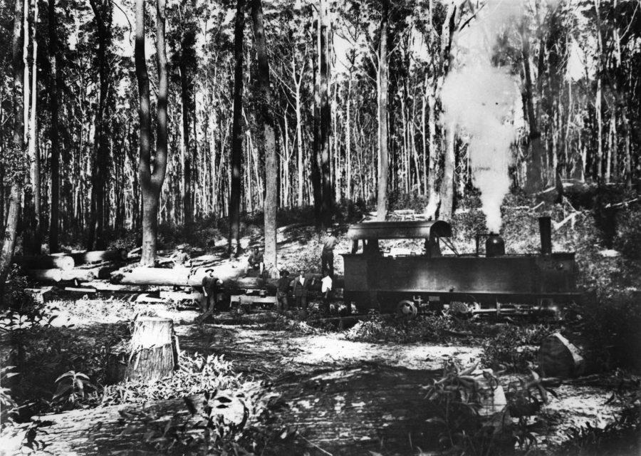 Logging on Fraser Island